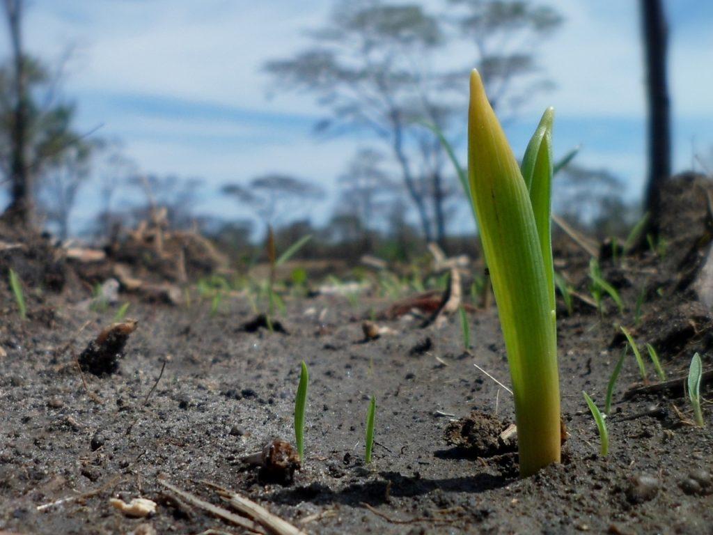 MICRORGANISMI EFFETTIVI: Una benedizione per il nuovo millennio