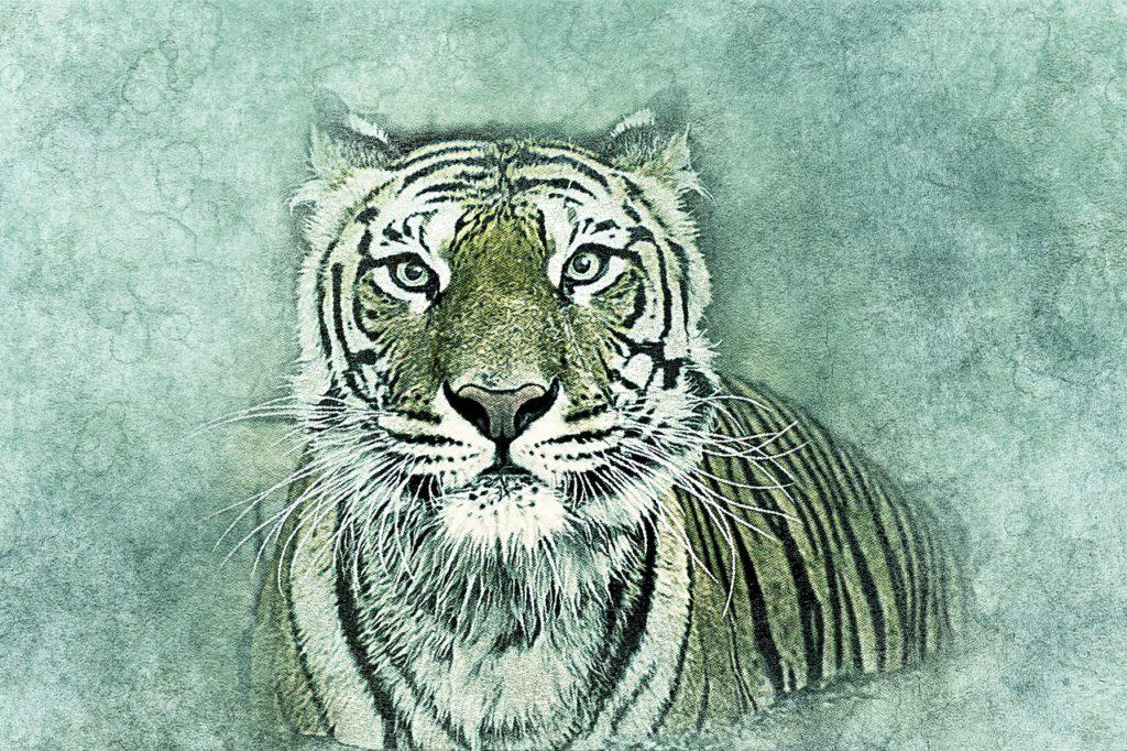 Editoriale di Majid Valcarenghi – La tigre di carta